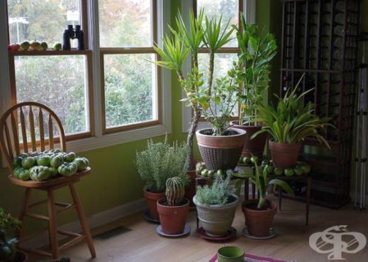 растения в дома