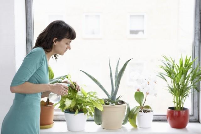 Правилната грижа за стайни растения